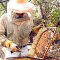 Departamento de Agricultura de Cananéia promove Programa de Capacitação em Apicultura