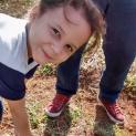 Alunos fazem colheita da Horta Educativa nas escolas Josino Silveira e José de Carvalho